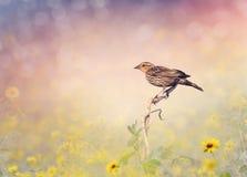 Brown Bird Perches on a Meadow Royalty Free Stock Photos