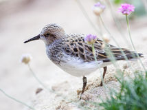 Brown Bird stock photo