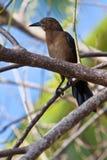 Brown bird sitting on an branch Royalty Free Stock Photos