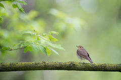 Brown Bird on Tree Branch during Daytime Royalty Free Stock Images