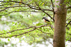 Brown bird on a tree branch Stock Photo