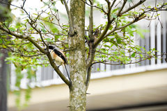Brown bird on a tree branch. Brown bird sitting on a tree branch alone Stock Photo