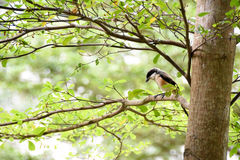 Brown bird on a tree branch. Brown bird sitting on a tree branch alone Royalty Free Stock Photography