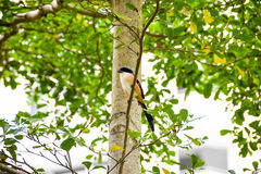 Brown bird on a tree branch. Brown bird sitting on a tree branch alone Royalty Free Stock Image