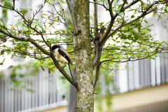 Brown bird on a tree branch. Brown bird sitting on a tree branch alone Stock Images