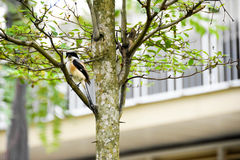 Brown bird on a tree branch Royalty Free Stock Photos