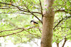 Brown bird on a tree branch Stock Images