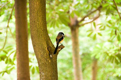 Brown bird on a tree branch Royalty Free Stock Photography
