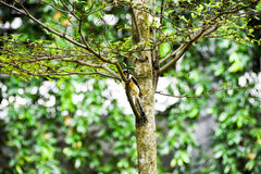 Brown bird on a tree branch Royalty Free Stock Image