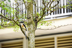 Brown bird on a tree branch. Brown bird sitting on a tree branch alone Stock Photos