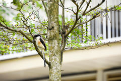Brown bird on a tree branch. Brown bird sitting on a tree branch alone Stock Photography
