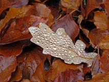 Brown-Blätter Stockfotos