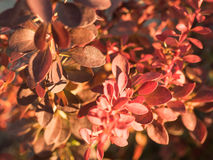 Brown-Blätter Stockbild