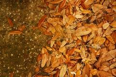 Brown-Blätter auf Beton Lizenzfreies Stockfoto