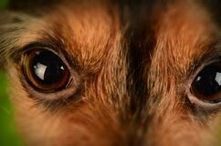 Brown and Black Animal Eyes Stock Photo