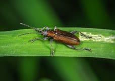 Brown and Black Bug stock photography