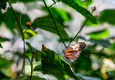 Brown and Black Butterfly on Green Stock Image