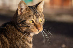 Brown and black cat Stock Image