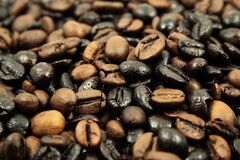 Brown and Black Coffee Beans Royalty Free Stock Photos