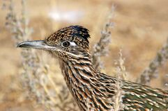 Brown and Black Feathered Bird Stock Photos