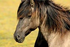 Brown Black Horse Royalty Free Stock Photos