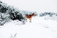 Brown and Black Horse White Surface Beside Coated Grass during Snow Royalty Free Stock Photos