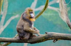 Brown and Black Monkey on Brown Branch during Daytime Stock Image