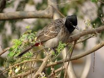 Brown Black Small Beak Bird on Brown Tree Branch during Daytime Stock Image