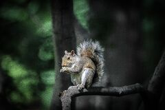 Brown and Black Squirrel Standing on Tree Branch during Daytime Royalty Free Stock Image