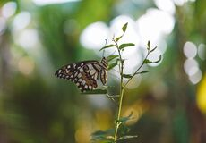 Brown Black White Butterfly on a Green Leaf Plant Close Up Photography Royalty Free Stock Photo