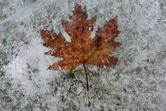 Brown-Blatt eingefroren im Eis stockbild