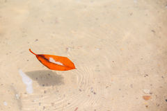 Brown-Blatt im Wasser Stockbilder
