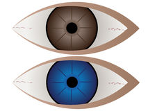 Brown and blue eye Royalty Free Stock Images