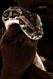 Brown-Boa constrictor in der Hand des Mannes stockfotografie