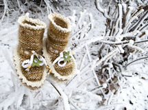 brown booties with white trim on the snowy branches Royalty Free Stock Photo