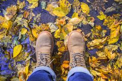Brown boots with colorful leaf fall tree. Autumn time leaves puddle top view. royalty free stock photos