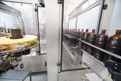 Brown bottles with  beer go on conveyor at  brewery Royalty Free Stock Photo