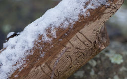 Brown branch covered with melting snow Royalty Free Stock Photo