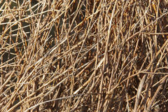 Brown branches. Nature background in warm tone Stock Image