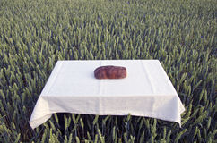 Brown bread loaf on table in farm wheat crop field Stock Images