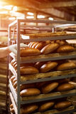 Brown bread loaves on rack. Royalty Free Stock Photos