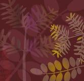 Brown breitet sich Hintergrund aus Stockbilder
