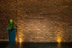 Brown brick wall with pot of plant and with golden lights. Empty interior for your design Stock Photos