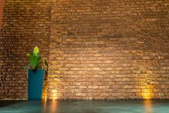 Brown brick wall with pot of plant and with golden lights. Empty interior for your design Stock Image