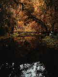 Brown Bridge Surrounded by Brown Leaf Trees Photo royalty free stock images