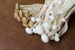 Brown-Buchenpilz und weißer Krabbenpilz Stockfotos