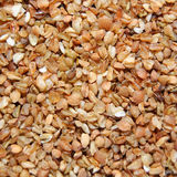Brown buckwheat grains Royalty Free Stock Image