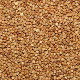 Brown buckwheat grains Royalty Free Stock Images