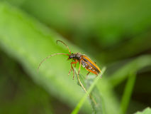 Brown bug on a green leaf Stock Photos