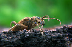 Brown bug on green leaf says hello Stock Photo